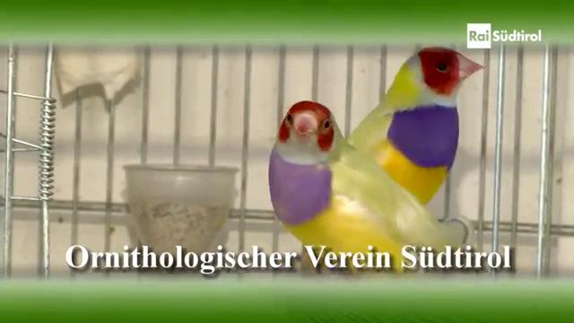 Calendario Fiere Ornitologiche 2020.Associazione Ornicoltori Atesini Home